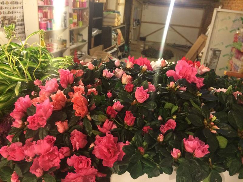 Цветы во владимире оптом